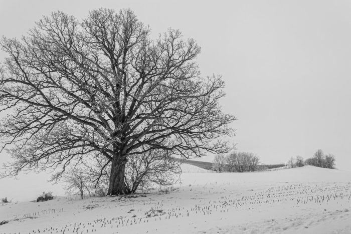 Black and White Photography, Sparta, WI
